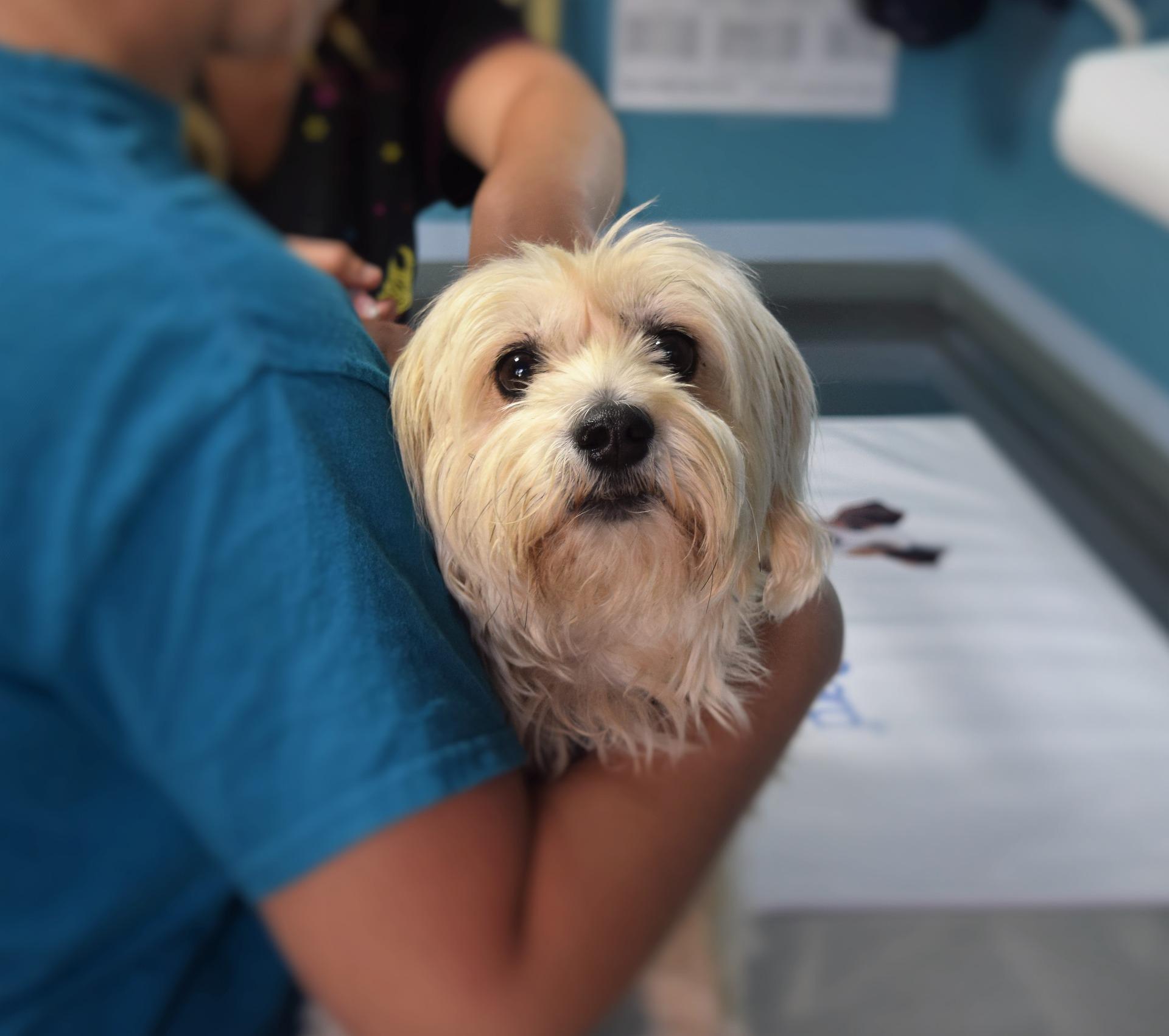 犬や猫、ペットの病気もセカンドオピニオン?動物病院探しやペット保険のおすすめは?