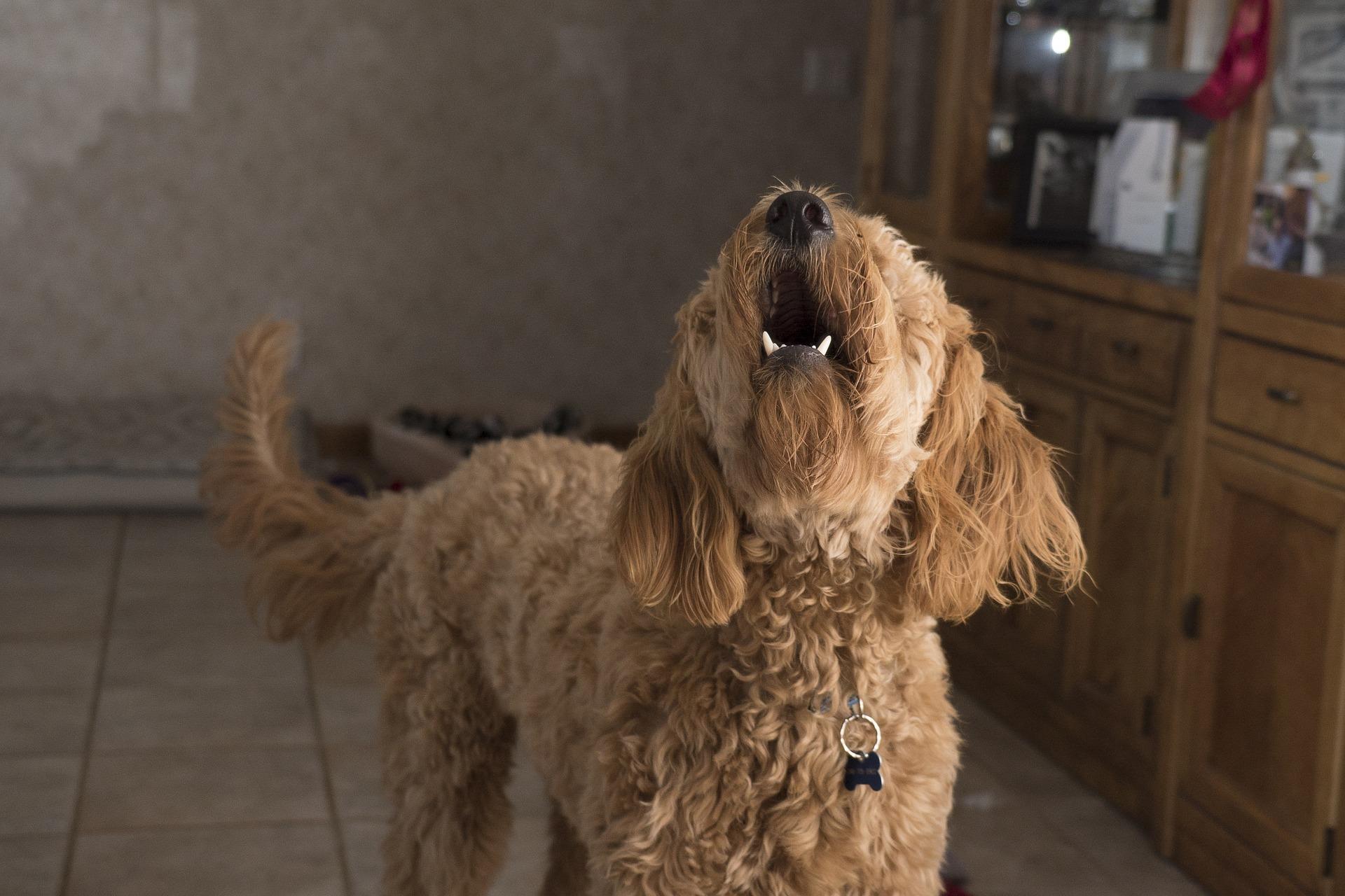 犬に無駄吠えなし?それでも吠える犬にしつけが必要な理由や、おすすめグッズ