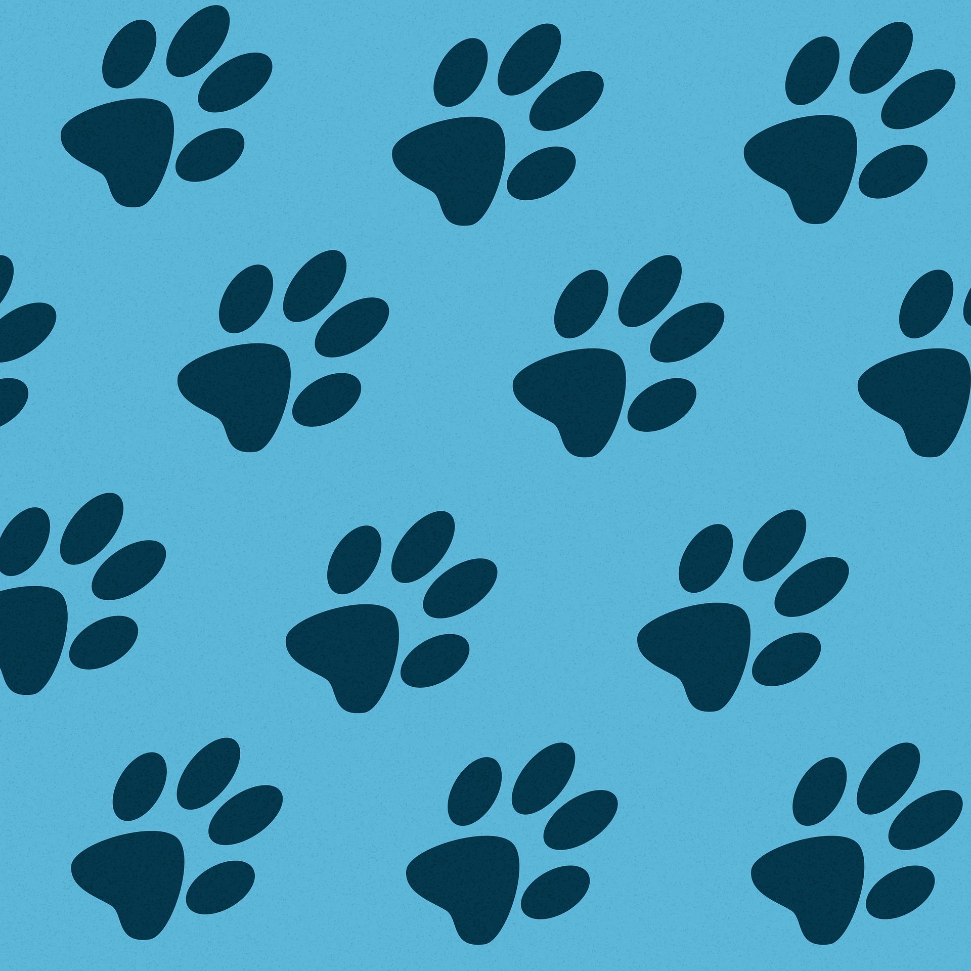 愛犬の皮膚や肉球、乾燥を放置すると危険?状態の確認や、ケアの方法とは?