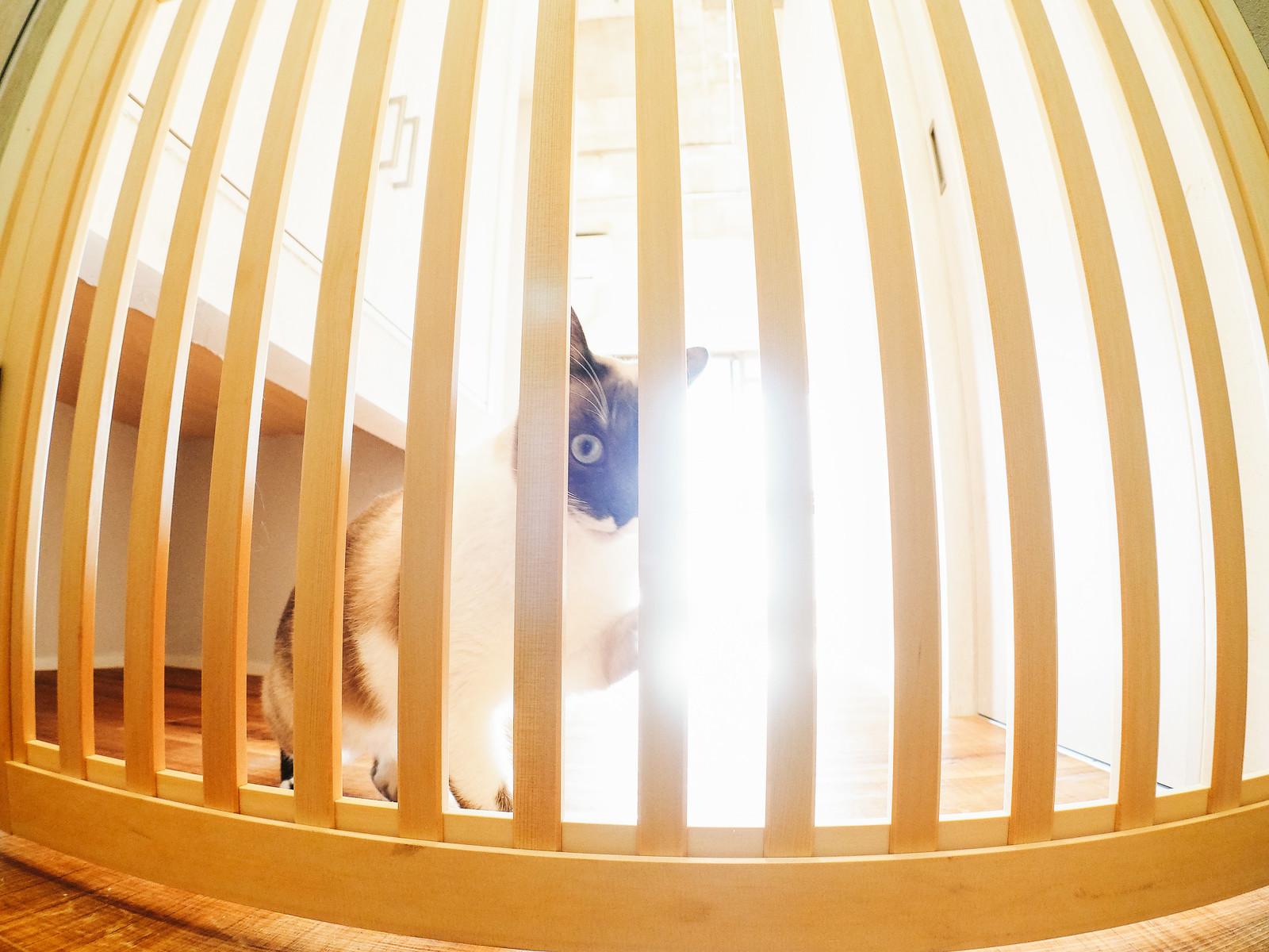 猫の脱走を防ぎたい!オーダーメイドの木製脱走防止扉「にゃんがーど」とは?